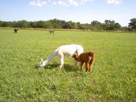 A wonderul meal in the brome pasture - for both of them!
